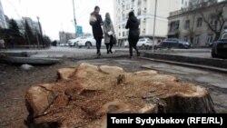 Кыргызстанда кыйылып жаткан бактар. Архивдик сүрөт.