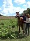Refugiul cailor