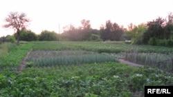 Земјоделска површина