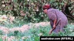 Mellekde işleýän bir türkmen zenany