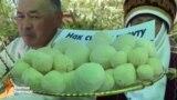 Бишкекте Курут фестивалы өттү