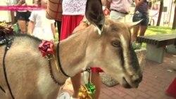 В Литве прошел конкурс красоты среди ... коз