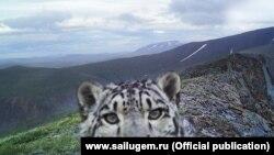 Фотография, сделанная фотоловушкой в Сайлюгемском национальном парке.