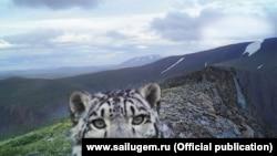 Фотография, сделанная фотоловушкой в Сайлюгемском национальном парке