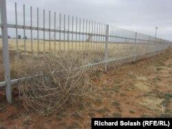 Только ветер катит перекати-поле на поля по соседству, где добывают нефть