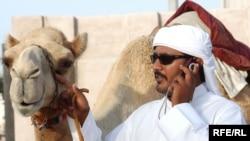 Перед началом боев на манеж выводят молоденькую верблюдицу, чтобы раззадорить флегматичных самцов