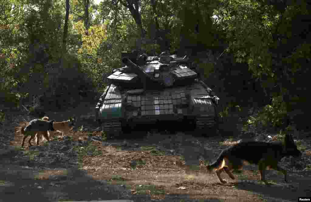 Dogs gather near a Ukrainian tank at a position near Donetsk in September 2014.