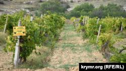 Крим, Балаклава, виноградники «Золота балка»