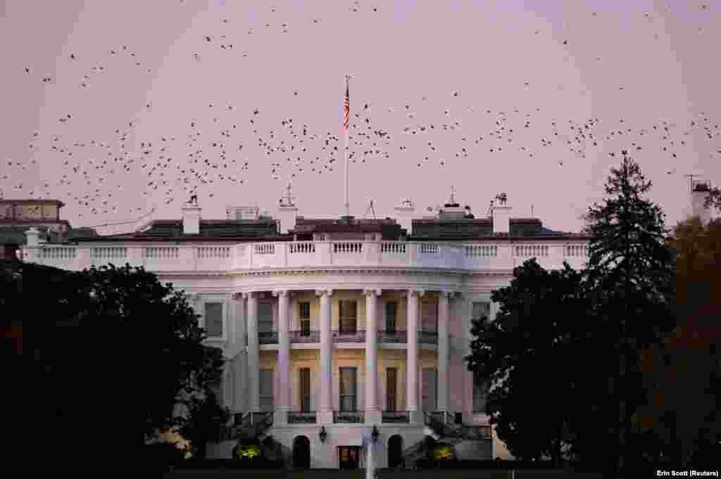 Птахи літають над Білим домом у сутінках у Вашингтоні