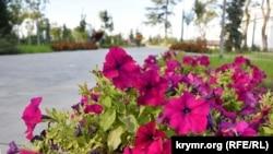 Петунии в Севастополе