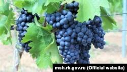 Кримський виноград