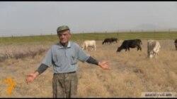 Թամադա գյուղապետն ու ծարավ կովերը