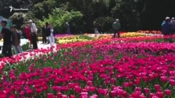Відкриття параду тюльпанів у Нікітському ботанічному саду