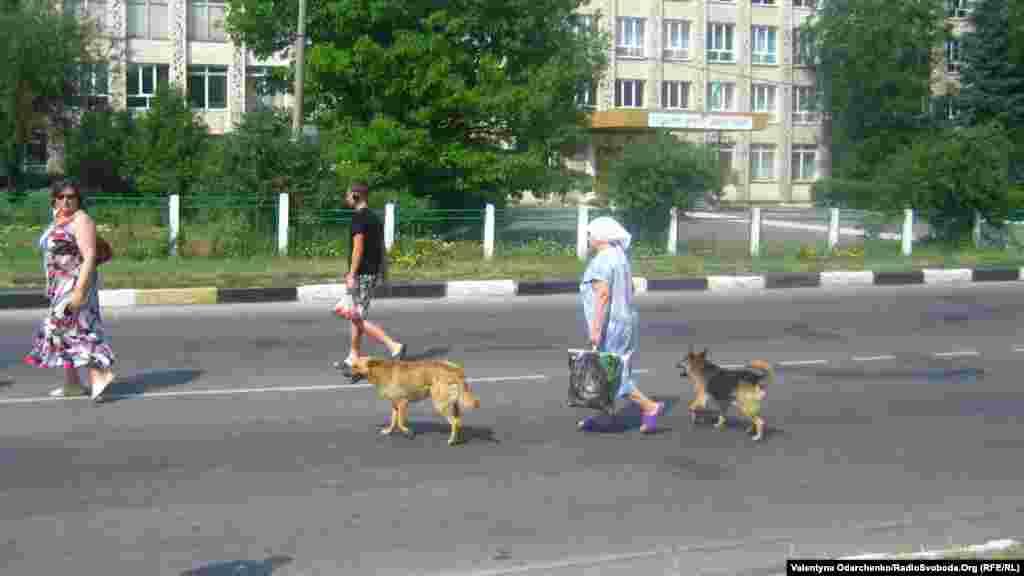 Правила руху обов'язкові і для собак. Вулиця Шкільна в Здолбунові