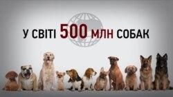 У Києві 30 тисяч безпритульних тварин (інфографіка)