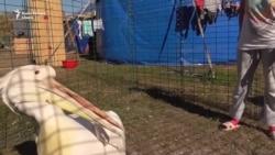 Цирк как жизнь. Люди, звери и арена