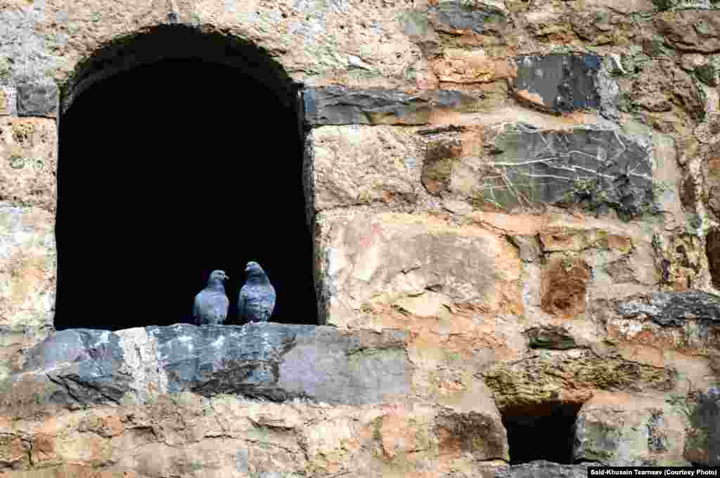 Голуби на окне средневековой чеченской крепости