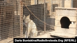 Комунальний притулок для тимчасового утримання безпритульних тварин, Черкаси, 10 вересня 2012 року