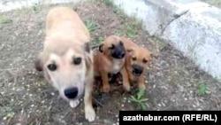Aşgabadyň 'Garaşsyzlyk' seýilgähinde eýesiz itler köpeldi