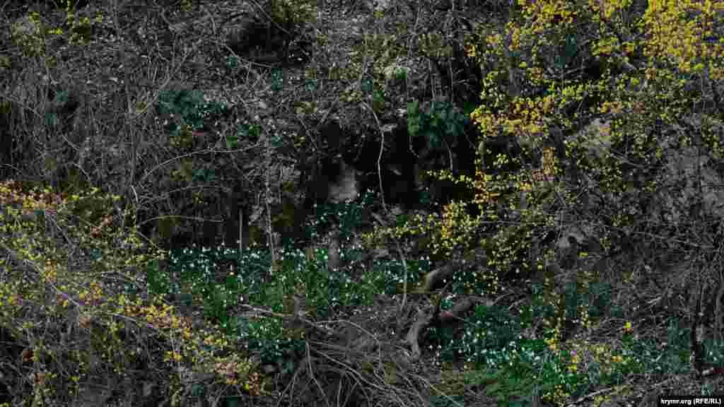 Береги Арманки нині обрамлені золотисто-білим візерунком квітучого кизилу і пролісків