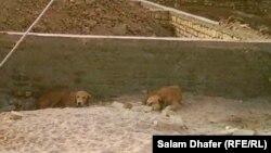 Тело младенца, загрызаное собаками, местные жители нашли позади школы в Чиракчинском районе Кашкадарьинской области.