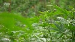 Канада марихуананы заңдастырған екінші елге айналды
