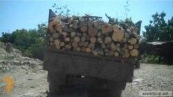 Ղարաբաղում մասսայական անտառահատումներ են իրականացվում