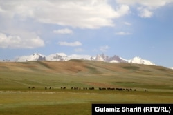 Livestock is a major livelihood source in Bamyan and other rural Afghan regions.
