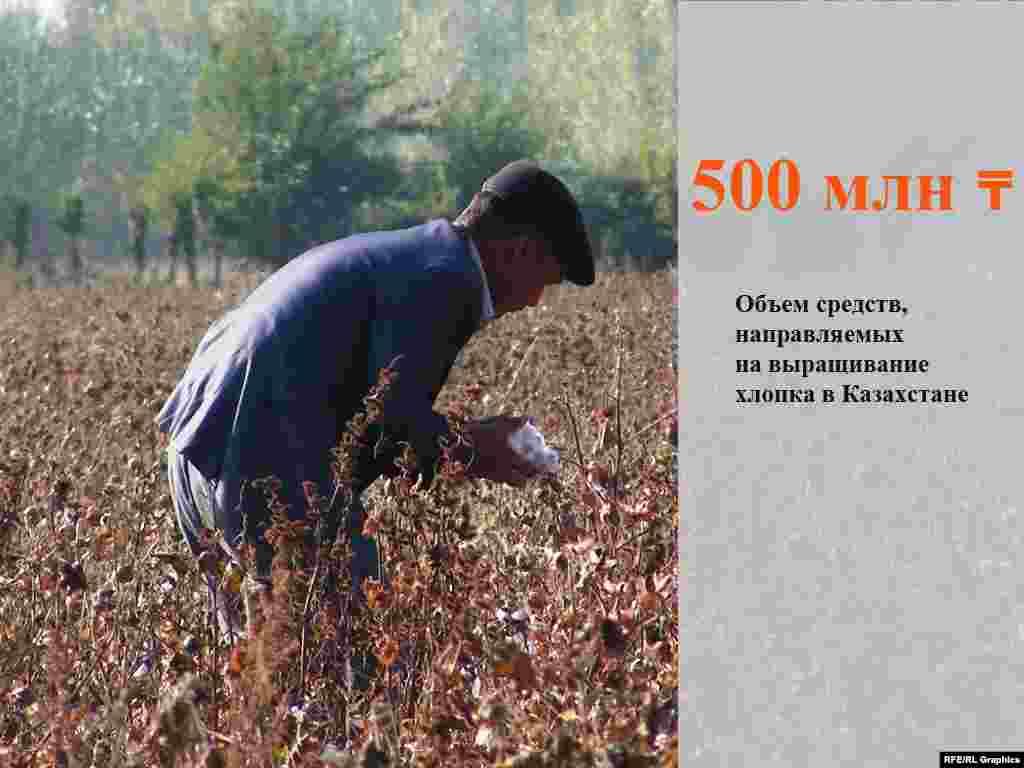 Фонд финансовой поддержки сельского хозяйстваКазахстана(это дочерняя компания национального холдинга «КазАгро») сообщил о выделении500 миллионов тенгесельхозтоваропроизводителям, выращивающим хлопчатник, на проведение весенне-полевых работ.