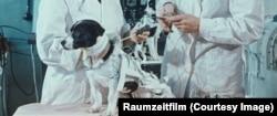 В СССР над собаками-космонавтами проводили жестокие эксперименты