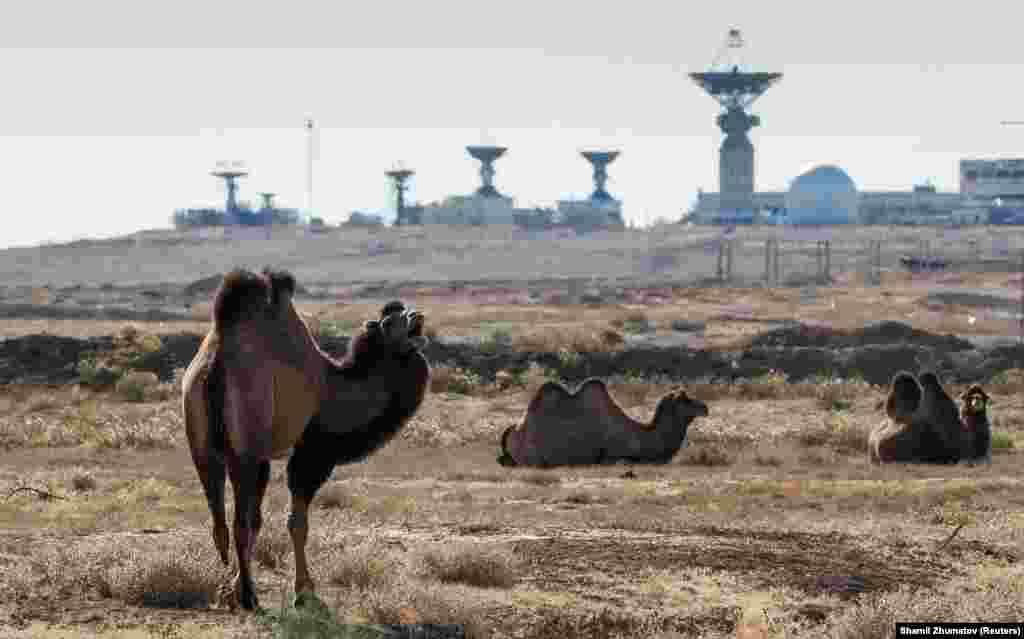 Верблюд також спостерігає за приготуваннями