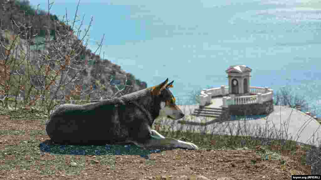 А этот бродячий пес в качестве места для отдыха нашел себе локацию с отличным видом – обрыв над террасой в парке у мыса Фиолент в Севастополе