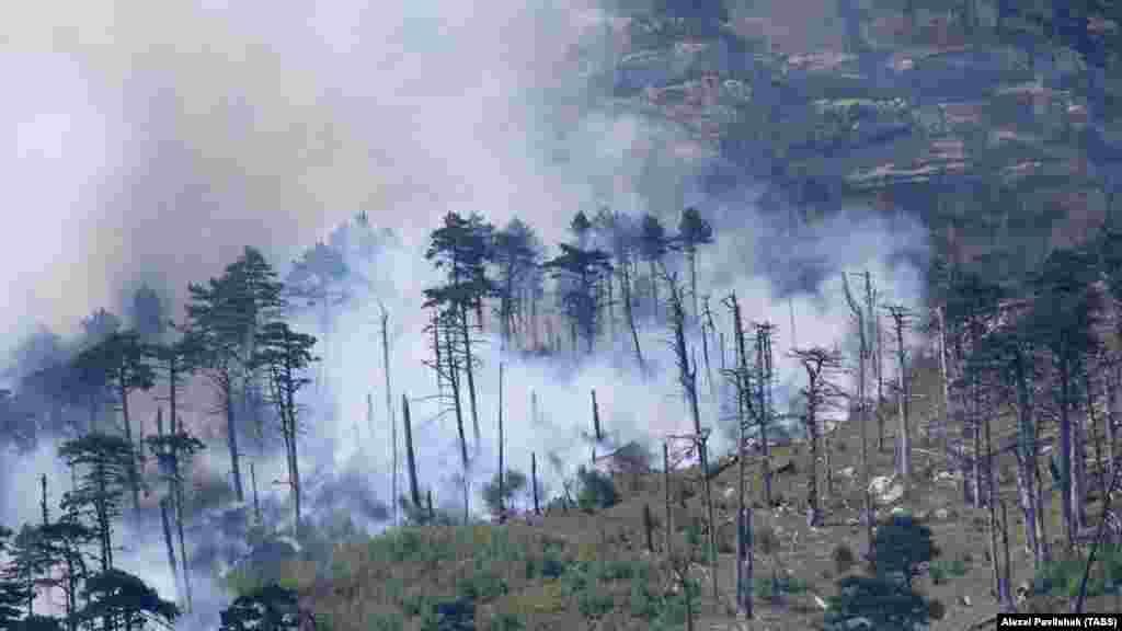 Вид на лес после пожара. Справиться с огнем пожарным и волонтерам удалось спустя два дня. На тот момент уже выгорело 26 гектаров заповедного леса