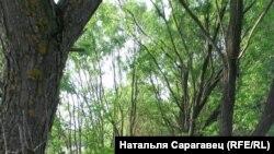 Фота дня: Натальля Сарагавец - вёска Дубнікі, Любанскі р-н, Менская вобласьць, 2014г.