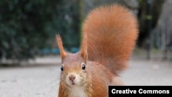 Not a gray squirrel