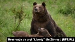 """Urs rezervația de urși """"Libearty"""" din Zărnești, județul Brașov"""