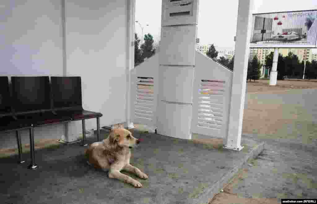 На автобусной остановке Ашхабада