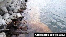 Sumqayıt, Şıx və Sahil qəsəbəsinin çimərliklərində mikrobioloji çirklənmə qeydə alınıb.