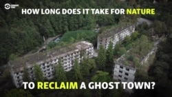 Forest Reclaiming Abkhaz Ghost Town