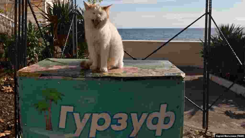 Местные коты подставляют свои пушистые мордочки зимнему солнцу