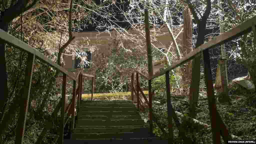 Освещающий ветви деревьев свет похож на иней