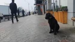 Дар Тоҷикистон маҳви сагҳои бесоҳиб хотима меёбад