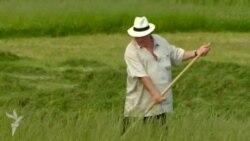 Lukashenko Depardieu ilə ot biçib