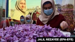 Afghan women sort saffron flowers in Herat, Afghanistan in November.