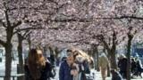Наслаждающиеся весенним солнцем стокгольмцы на открытой площадке столичного ресторана. 26 марта 2020 года.
