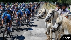 The pack rides past horses during the 176.5 km sixth stage of the 100th edition of the Tour de France cycling race on July 4, 2013 between Aix-en-Provence and Montpellier, southern France. AFP PHOTO / PASCAL GUYOT