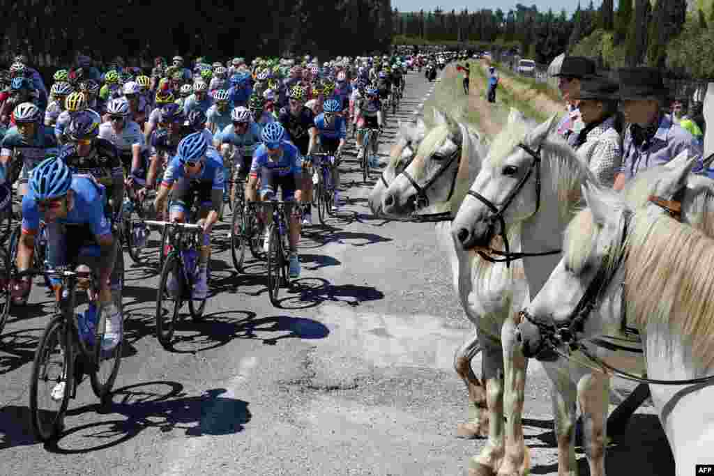 The pack in the 100th Tour de France rides past horses during the 176.5-kilometer sixth stage, between Aix-en-Provence and Montpellier, in southern France. (AFP/Pascal Guyot)