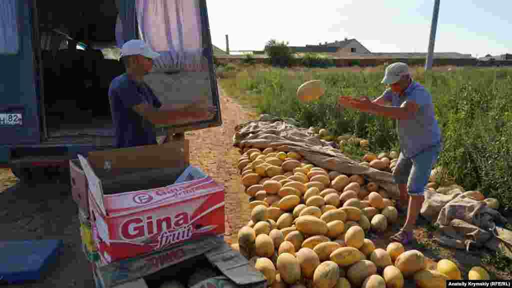 Их выращивает местная крымскотатарская семья на околице села Уютное