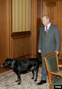 Владимир Путин с лабрадором Кони