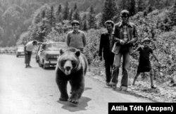 """Un urs și câțiva turiști pe șoseaua Transfăgărășan în 1982. Se pare că ursul era un """"cerșetor"""" celebru al acelei zone montane."""